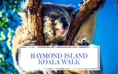 Raymond Island Koala Walk Gippsland Australia.