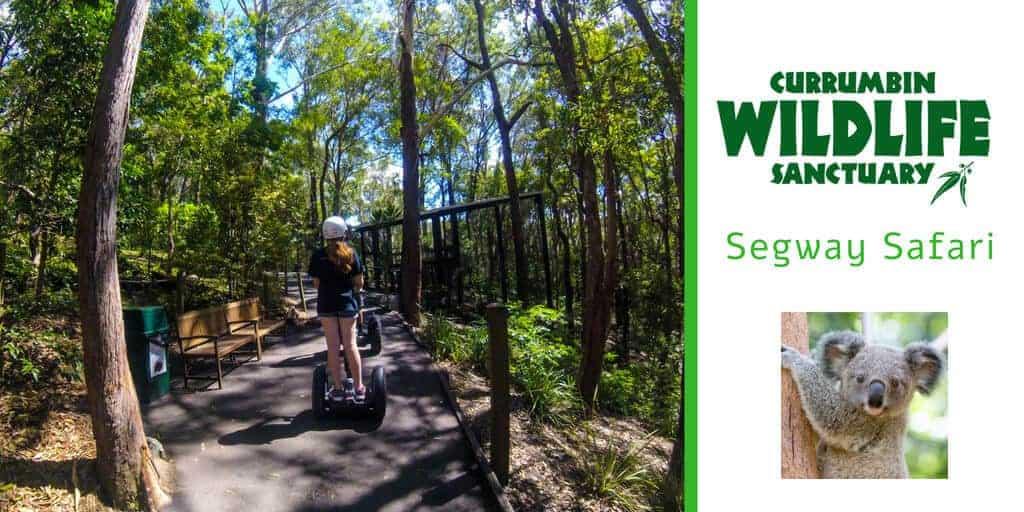 Hills, thrills and Koalas Currumbin Sanctuary Segway Safari