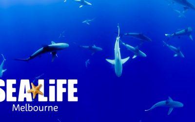 A brilliant day at Sea Life Melbourne aquarium